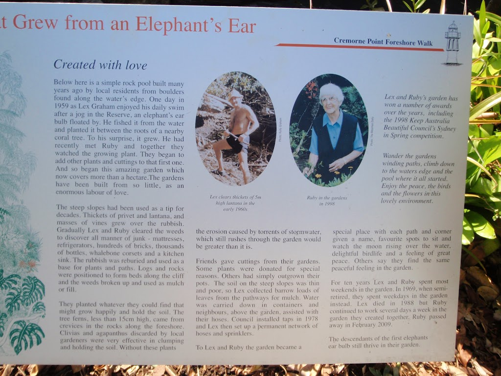 Information on Elephant's Ear