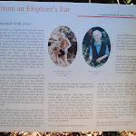 Information on Elephant's Ear