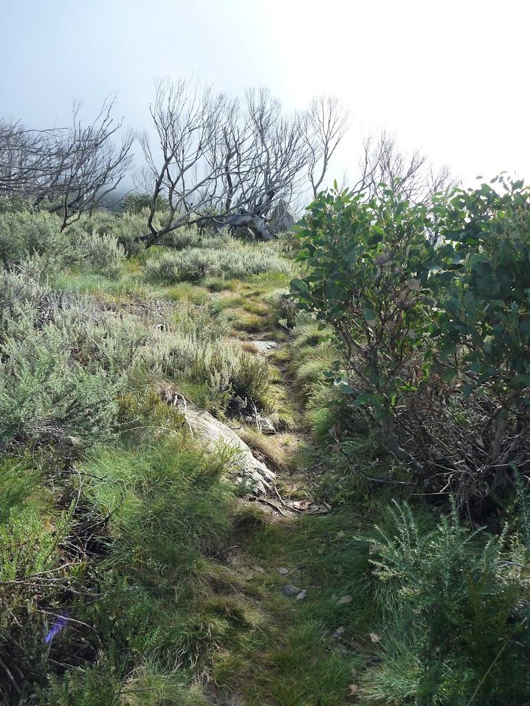 Track leading up ridge