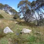 Guthega Rd management trail (263279)