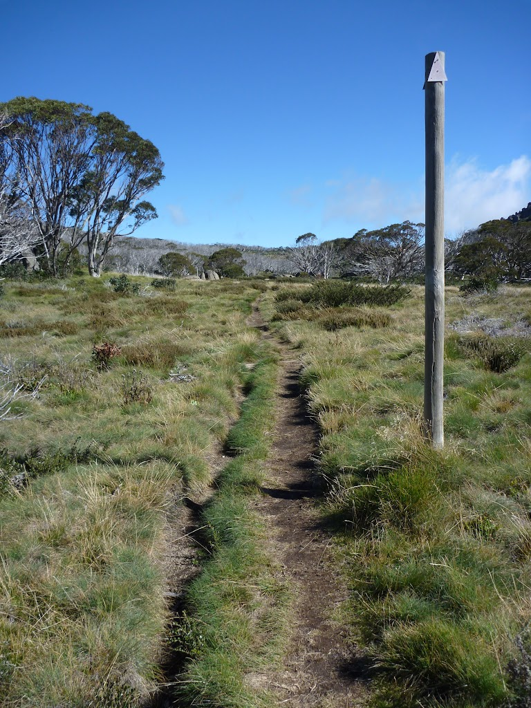 Some sections of the Porcupine Track are close the the snow pole line