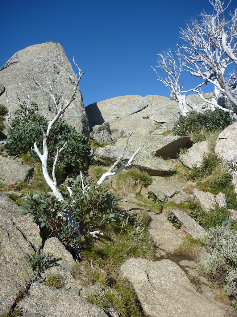 Track leading up to the eastern summit of Porcupine Rocks