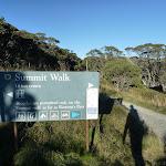 Summit Walk track head (265367)