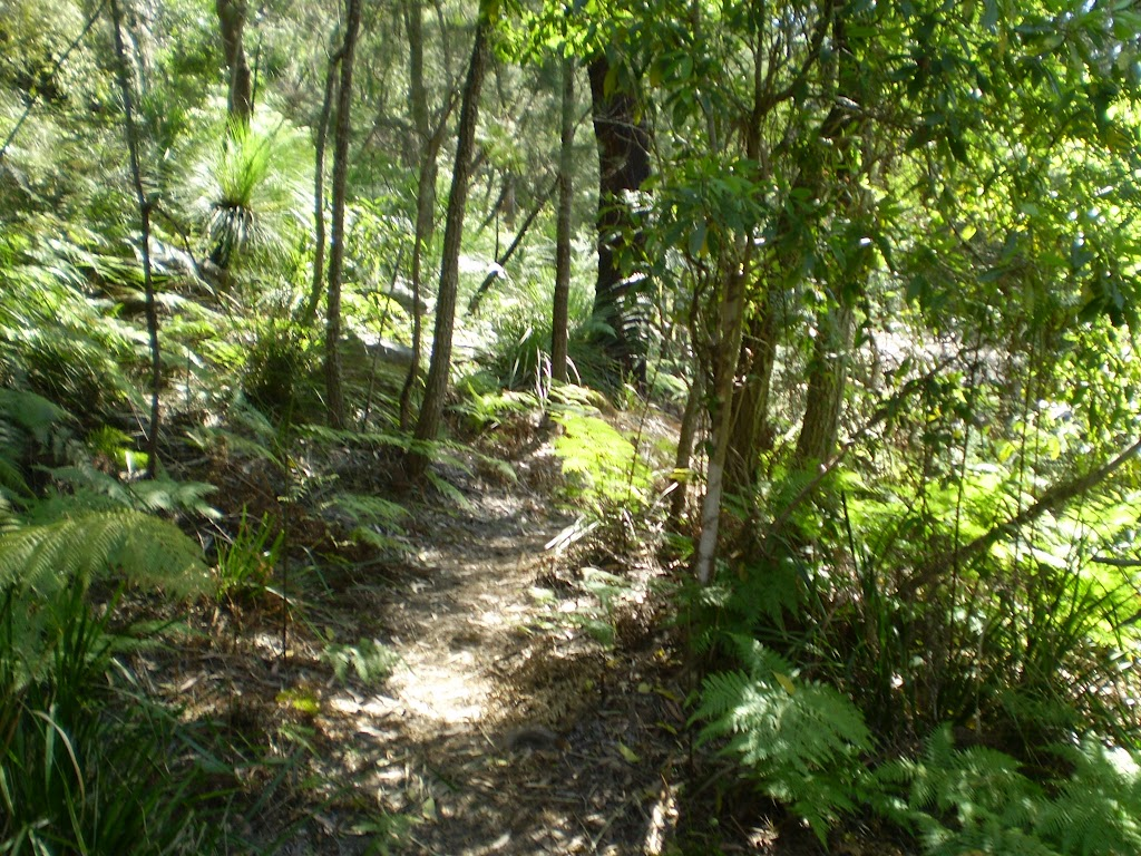 Continuing along the bushtrack
