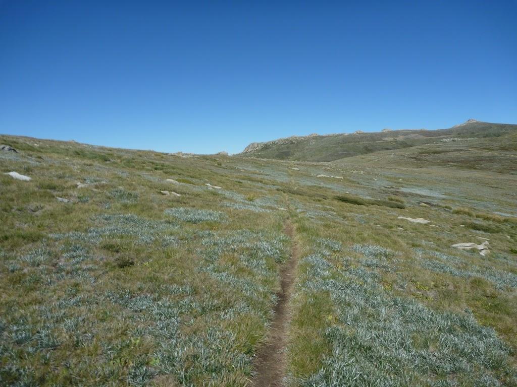 Mt Townsend Track near Main Range Track