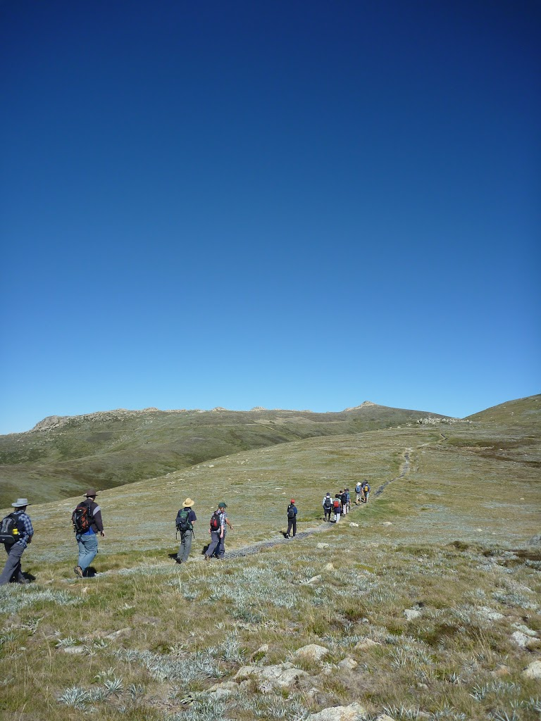 Walkers on Main Range track at Int of Main Range and Muellers Peak track