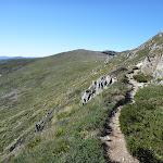 Narrow track above Albina Lake (267293)