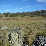Old fence post at Boggy Plain