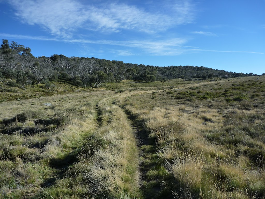 Trail winding up through Boggy Plain valley