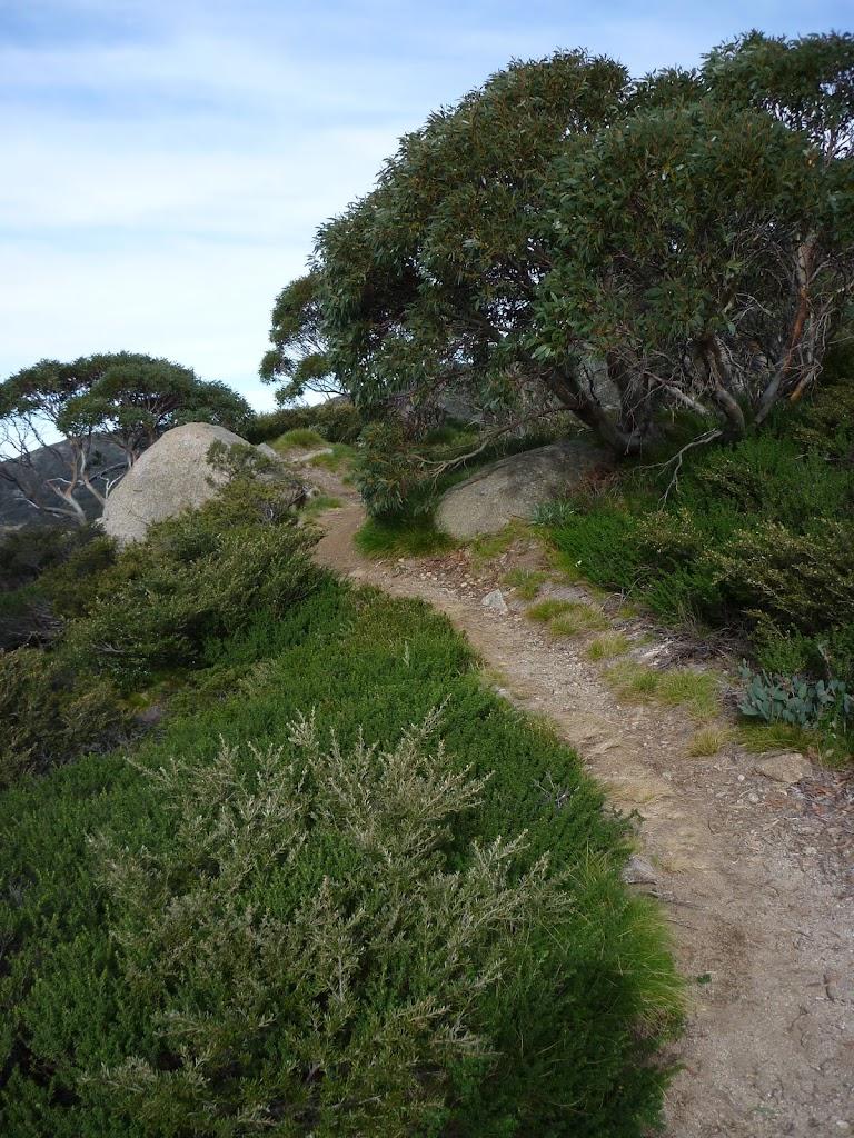 Mt Stilwell Track