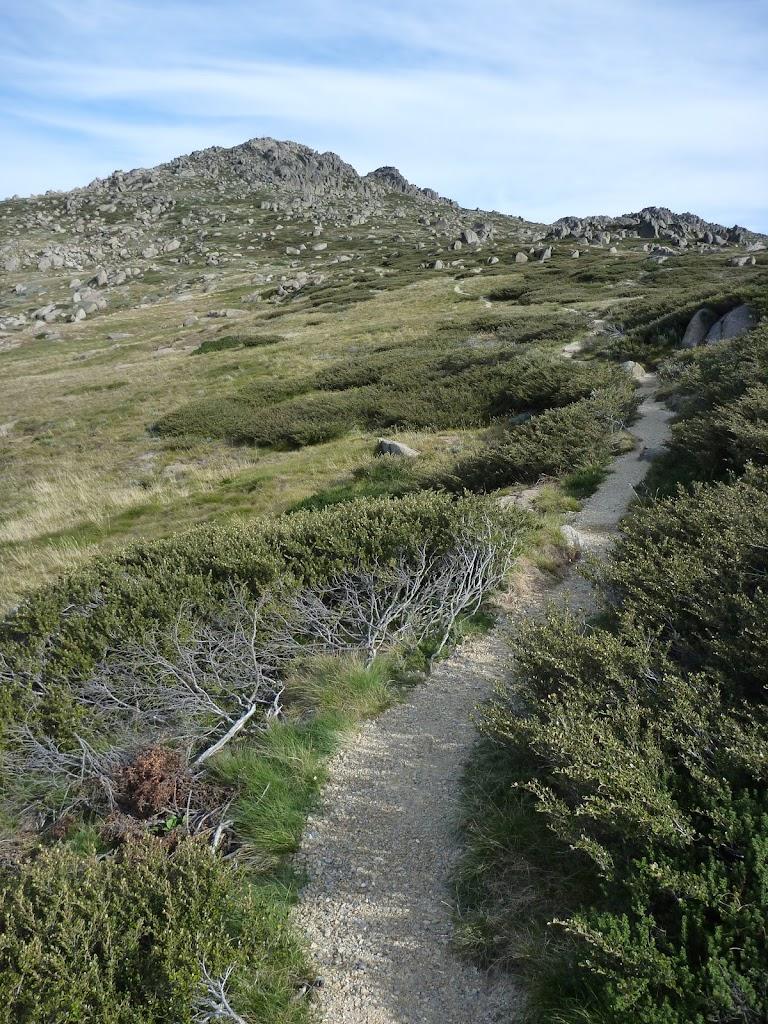 Kangaroo Ridge looking up to Mt Stilwell