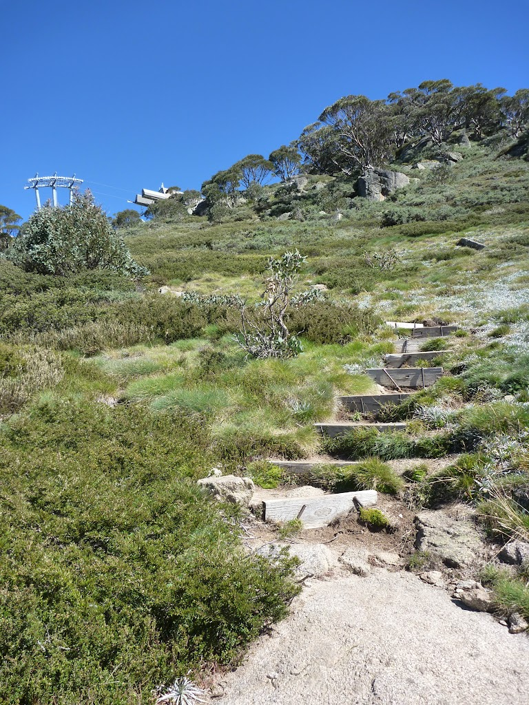 Looking up at the chairlift from Merrits Nature Track