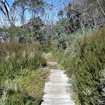 Some duckboarding on Merrits Nature Track (272270)