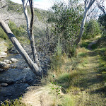 Walking beside the Thredbo River