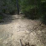 Smiths Creek Trail near Terrey Hills (27458)