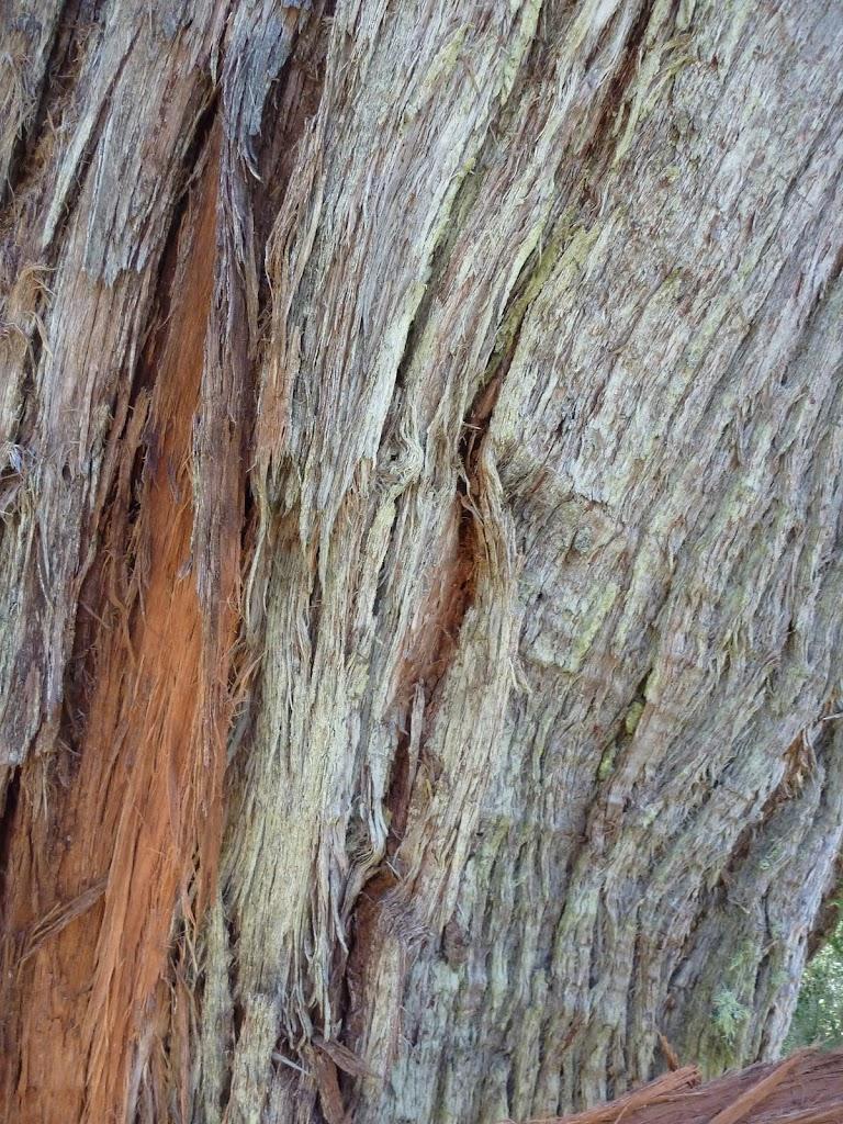 String Bark (275471)