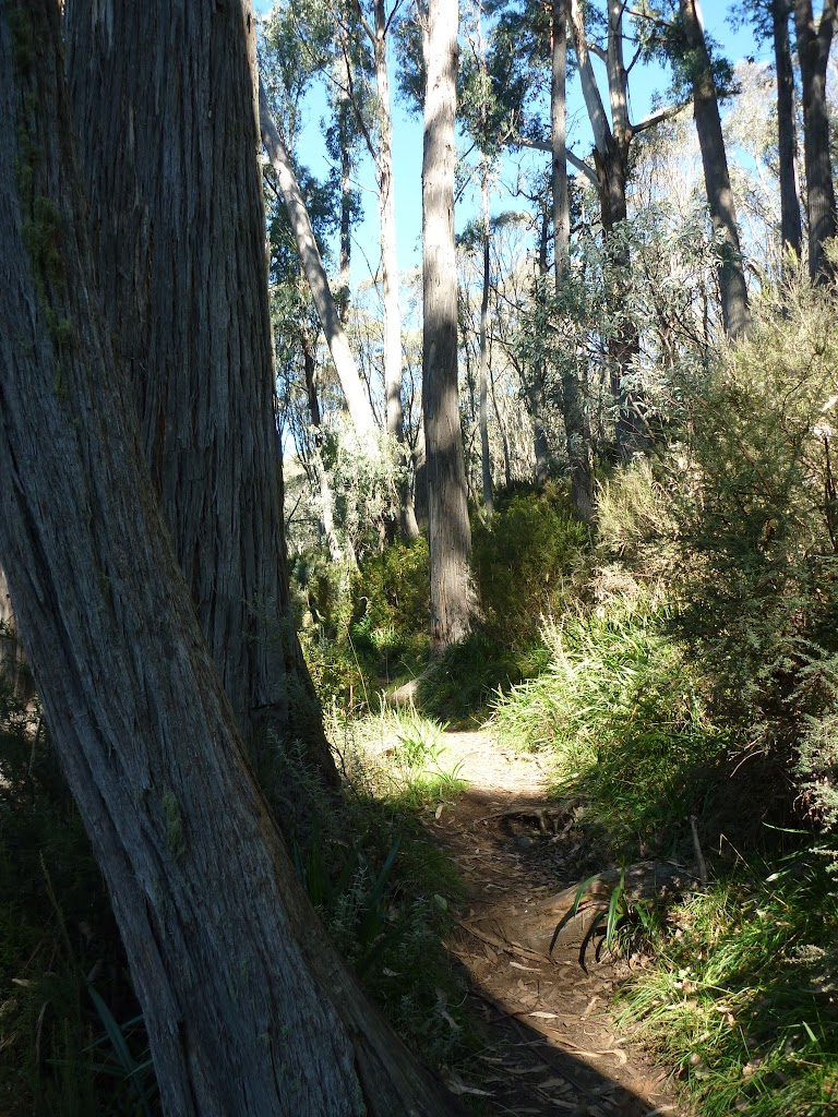 Stringybark Trees