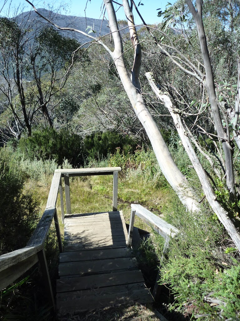 Walking down the stairs on Merrits Nature Track