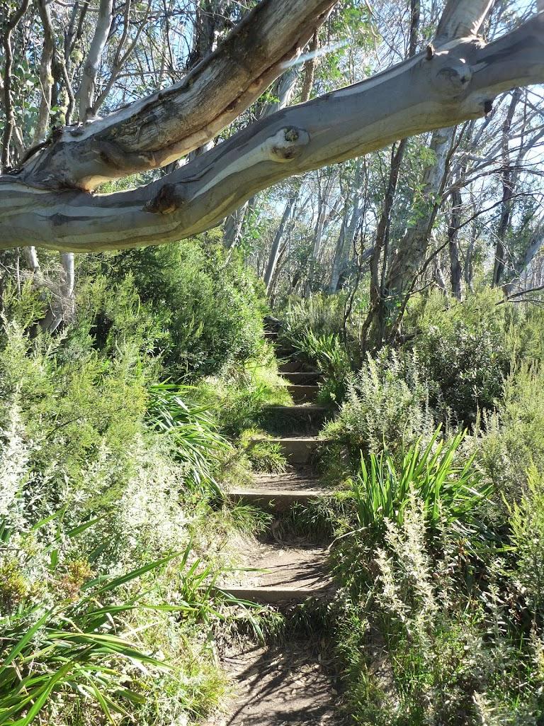 Merrits Nature Track