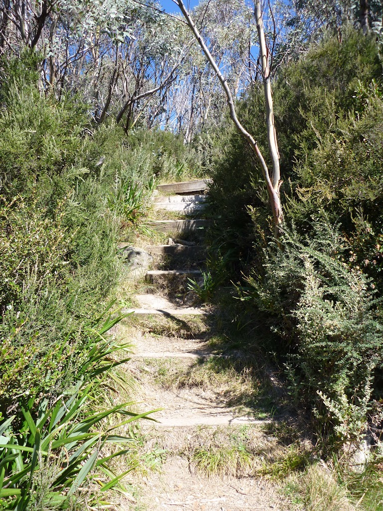 Many steps on the Merrits Nature Track