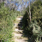 Many steps on the Merrits Nature Track (276254)