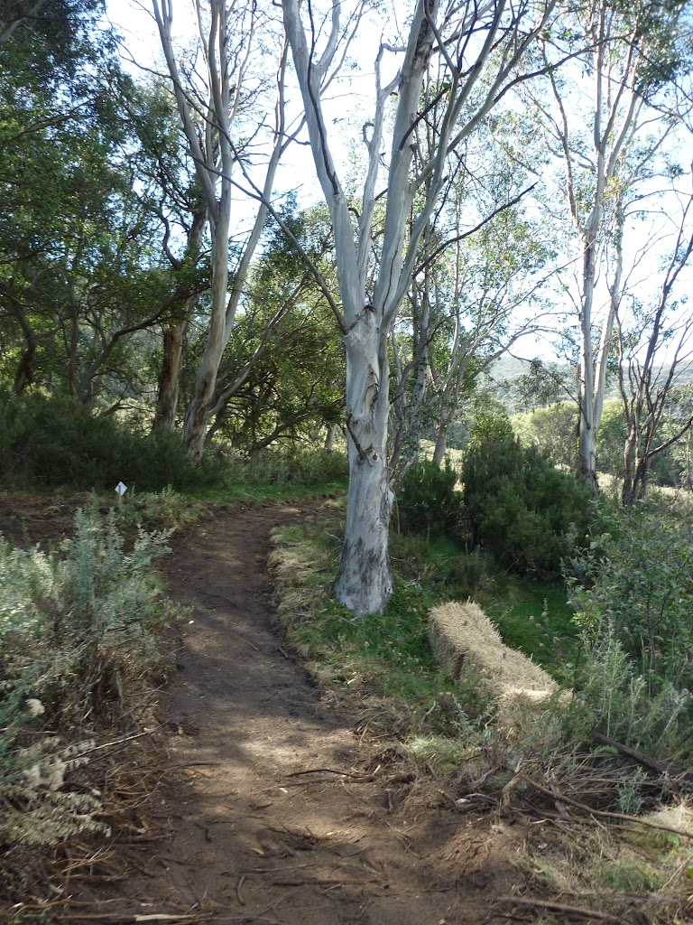 Newly formed section of Bridle Trail