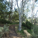 Newly formed section of Bridle Trail (278042)