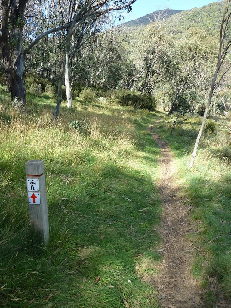 Bridle Trail Loop track
