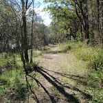 Trail leading in