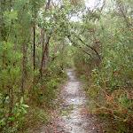 Track through heath