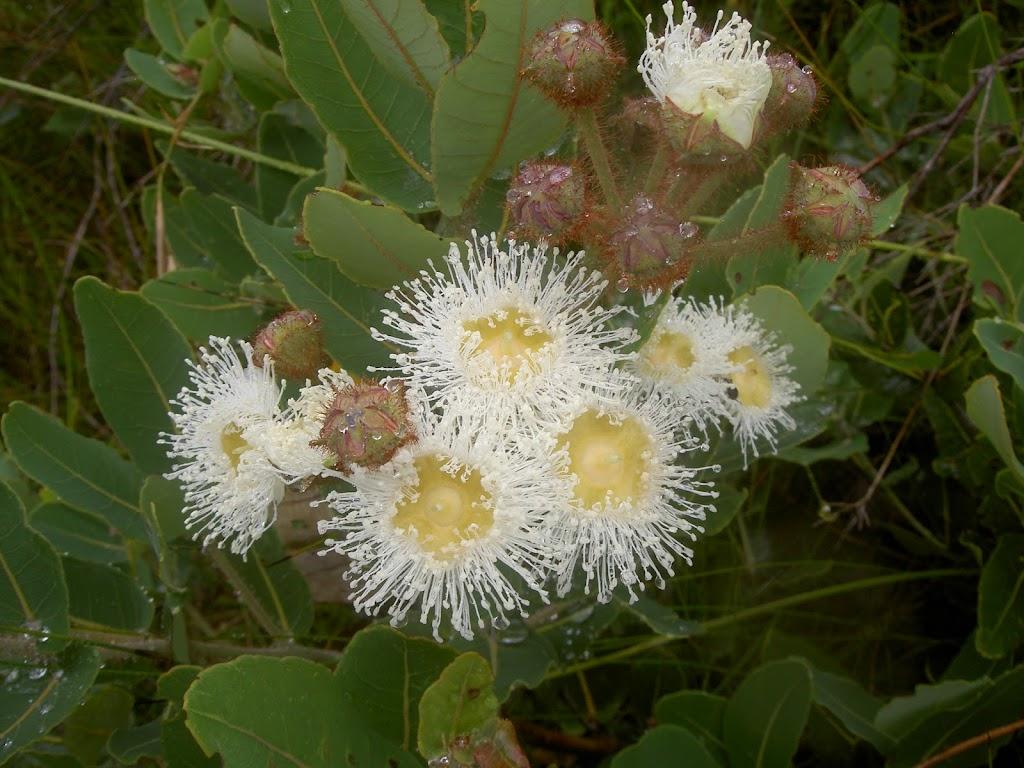 Flowers (28064)