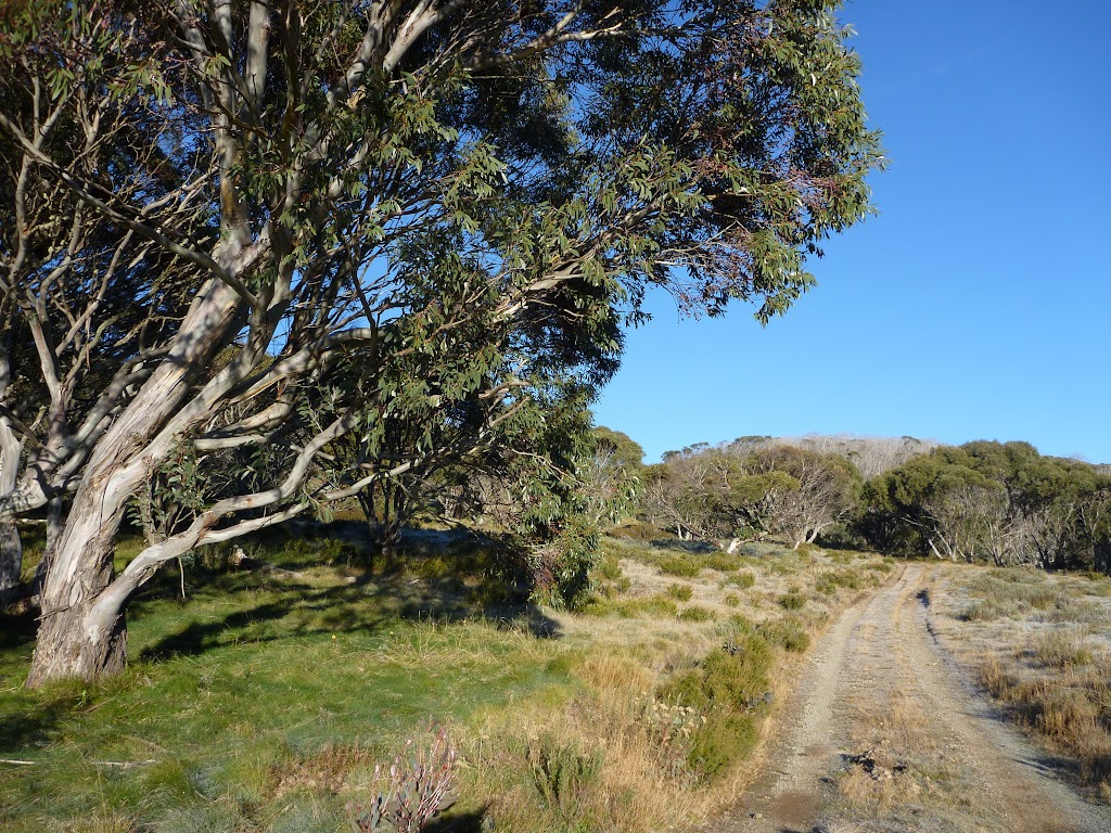 Cascade Trail at the tree line south of the Threbo River