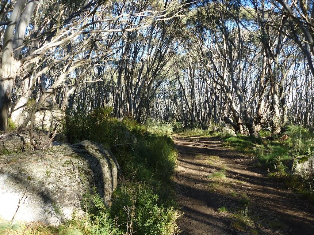 An avenue on the Cascade Trail