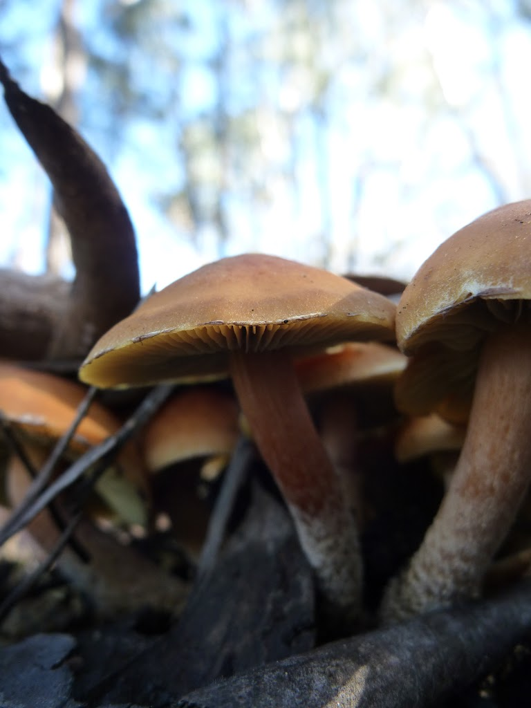 Mushrooms on the Cascade Trail (282752)