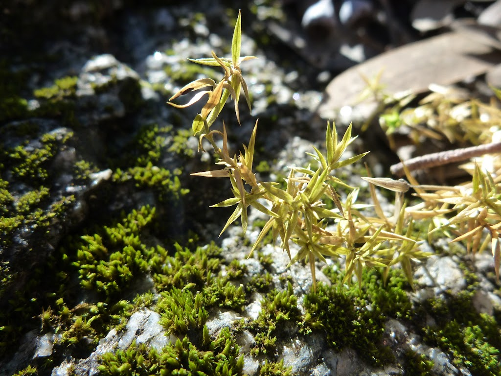 Moss growing on the Granite