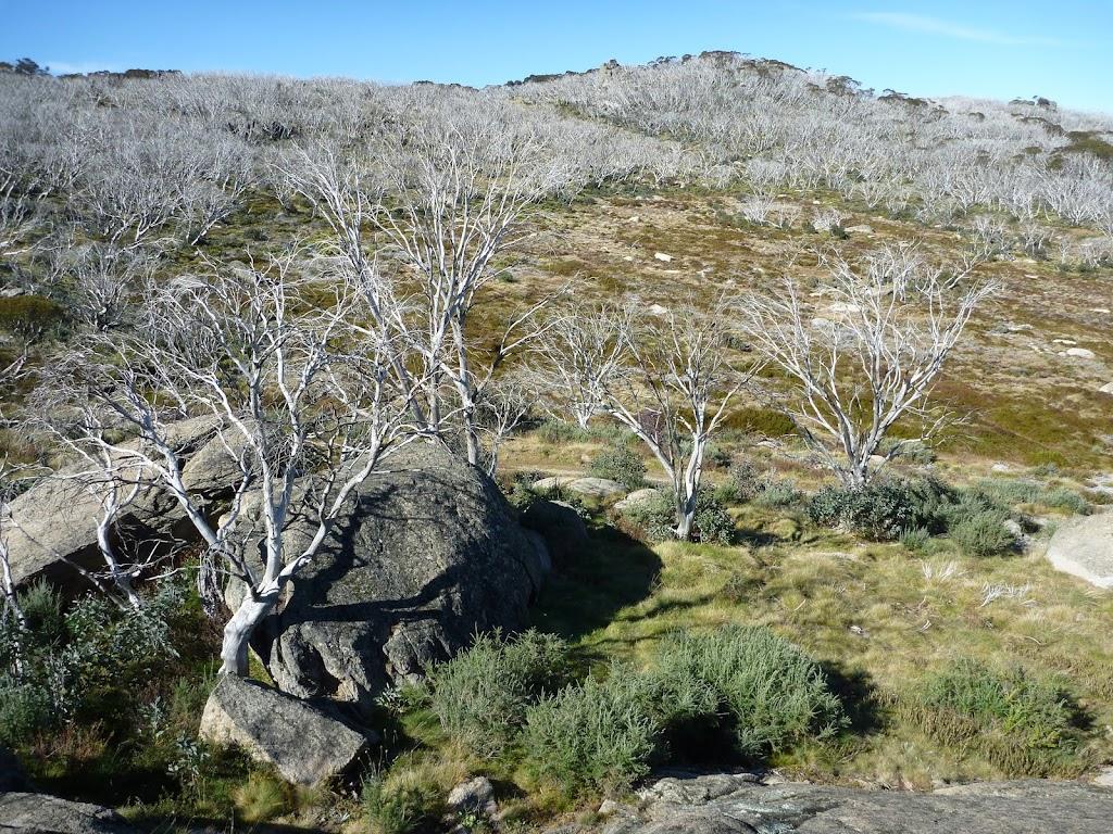 Rocks and tress from Bobs Ridge