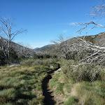 Thredbo River Valley near Dead Horse Gap (283943)