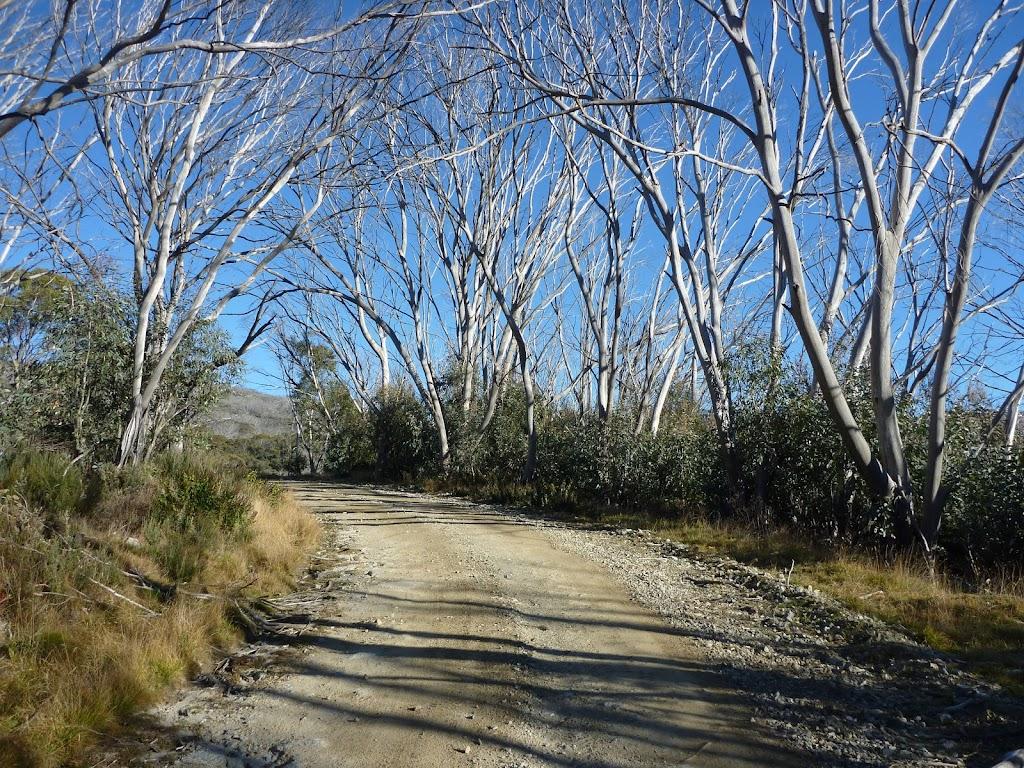 Snow gum lined Schlink Trail
