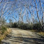 Snow gum lined Schlink Trail (284783)