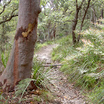 West Head Lookout Track (28535)