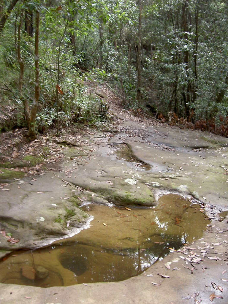 Jerusalem Bay Track creek crossing (28667)