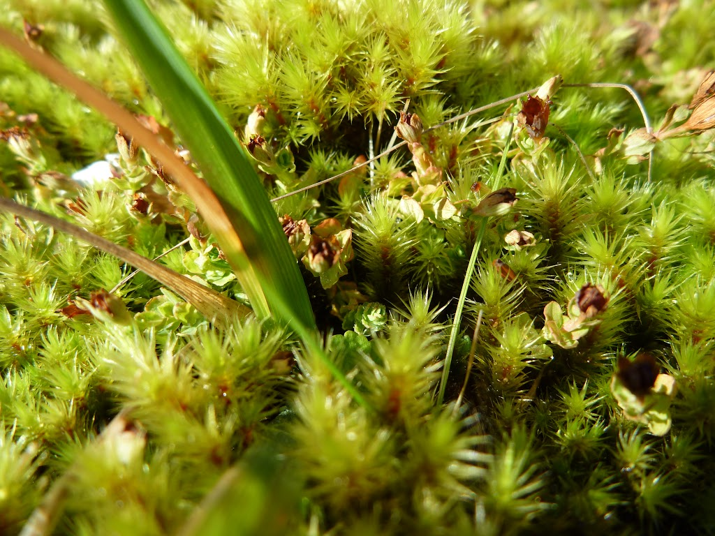 Moss beside track (287753)