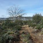 Farm Ridge Trail near Round Mountain Hut (289501)