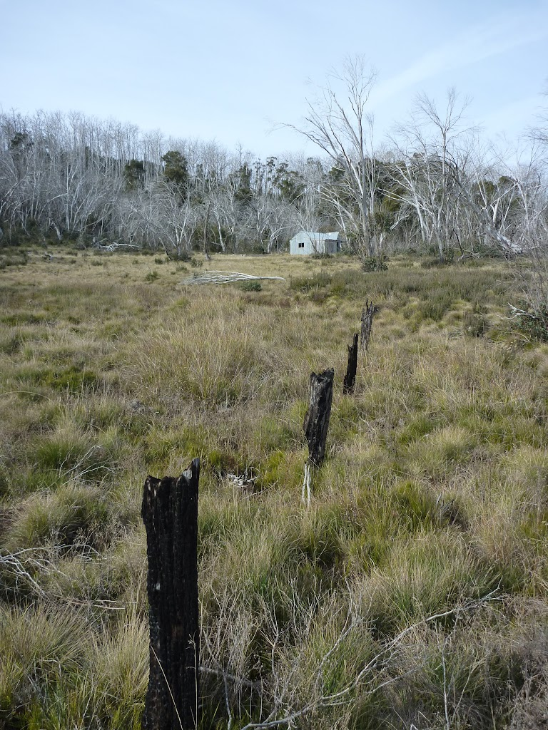 Old fence-line at Paton's Hut