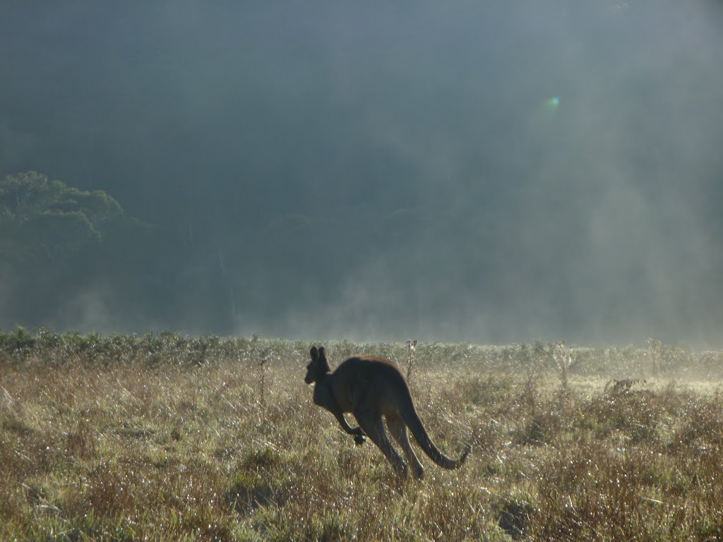 Roo at Behrs Flat