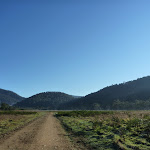 Walking along the 4WD trail at Behrs Flat (292057)