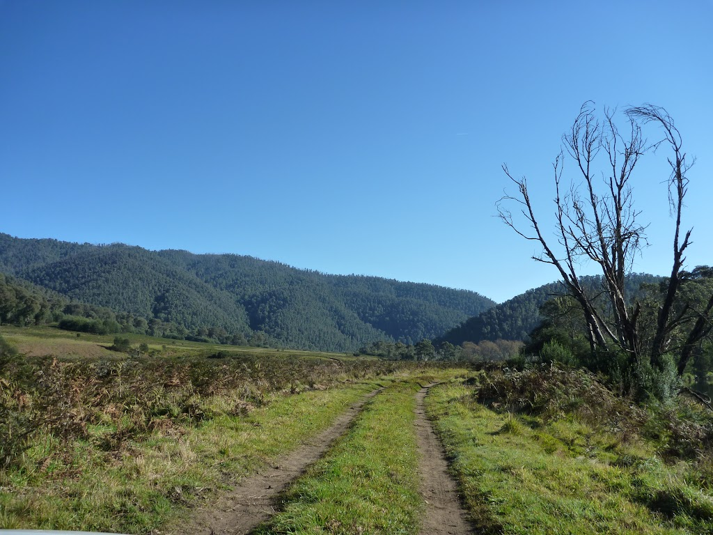 Looking along trail near Swampy Plains Creek