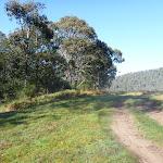 Walking along trail beside Swampy Plains Creek (293101)