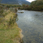 Beside the Thredbo River (296213)