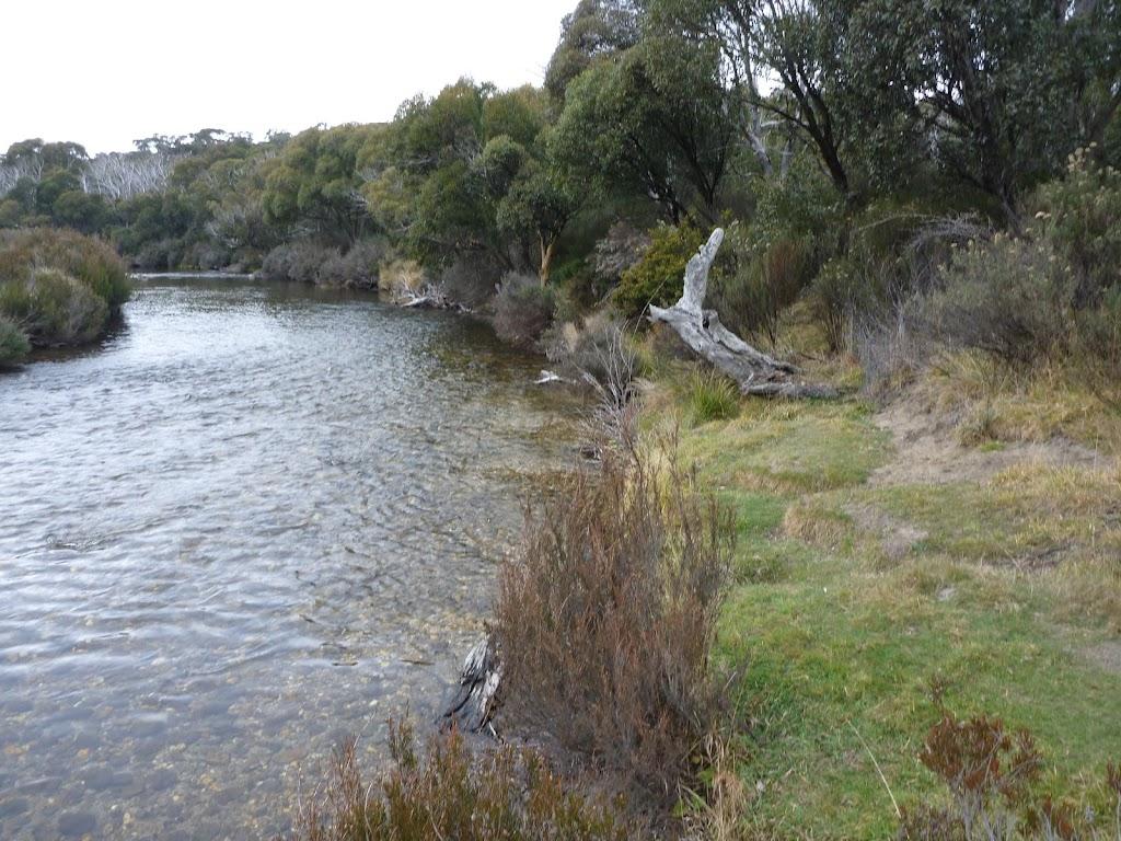 Grassy edge of the Thredbo River